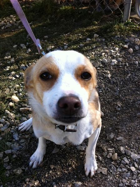 Dog Adoption Muskoka